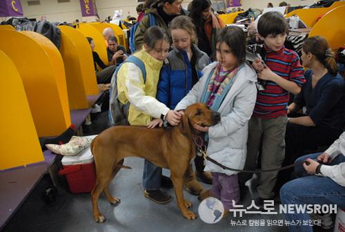 08.2.11 dog show 293.jpg
