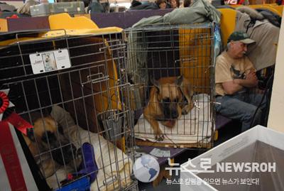 08.2.11 dog show 775.jpg