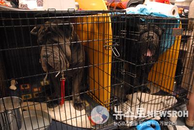 08.2.11 dog show 1008.jpg