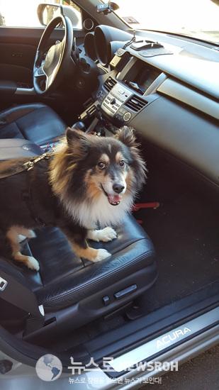 나드리 가는 날  렉스 먼저 차에 먼저.jpg