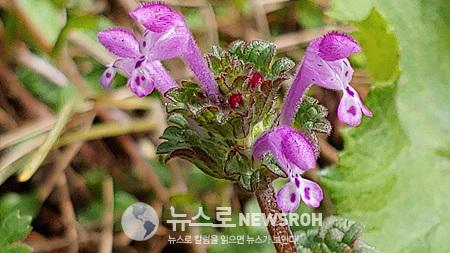 KakaoTalk_Photo_20200330_1022_36912.jpg