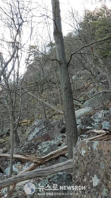 약 하프마일 후 등산로를 잃어 무조건 정상으로..경사도가 70여도...jpg