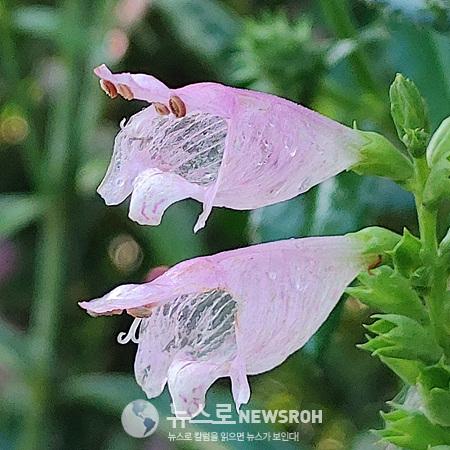 0909 꽃범의꼬리.jpg